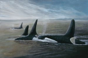 PROCESSION (Orca Pod)