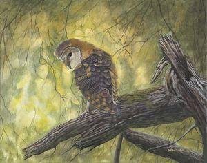 GOLDEN GIRL (Barn Owl)