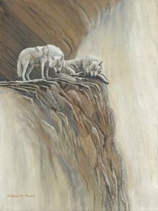 View from Above  (Arctic Wolves)