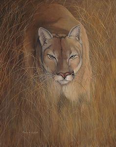GRASSLANDS SHADOW (Cougar)