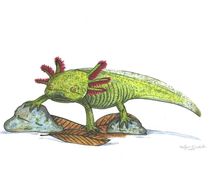 Wild Axolotl - Kaitlyn Elizabeth