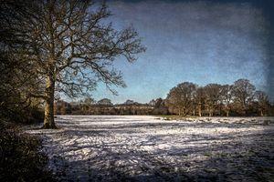 Snowy Tidmarsh Meadows