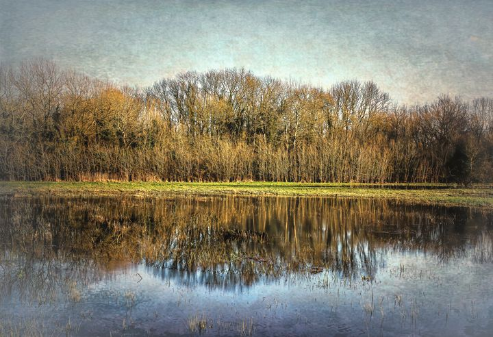 Winter Trees Reflected - Ian W Lewis