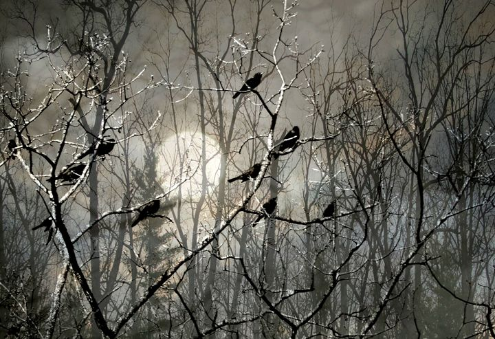 Blackbirds in a Moonlit Sky - Jill Sable Photography