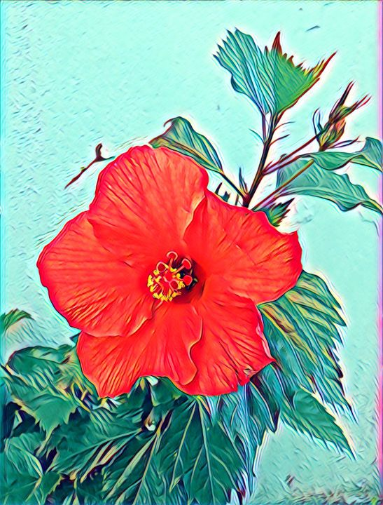 Hibiscus flower - FGHFGFJ