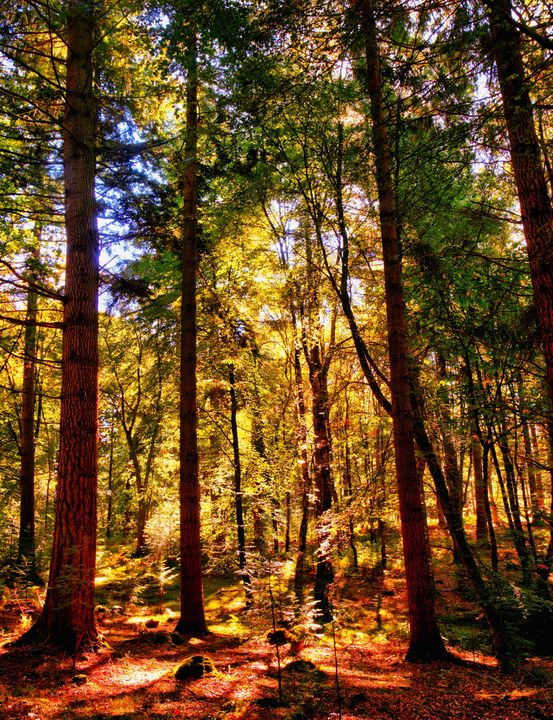 Sunlight In The Forest - JT54Photography