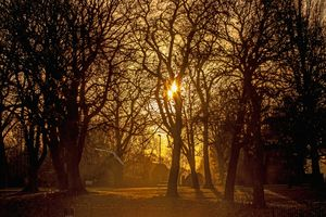Sunlight And Shadows In The Park