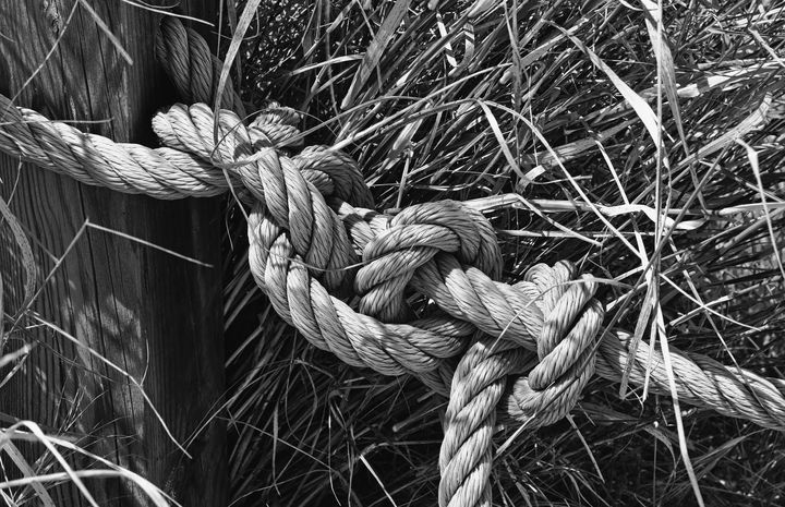 Knot In The Grass - JT54Photography