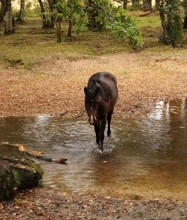 Crossing A New Forest Stream - JT54Photography