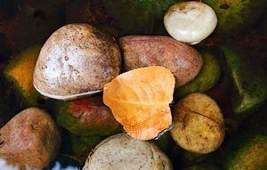 Floating Leaf And Pebbles