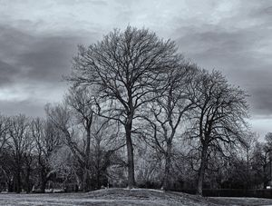 Winter Trees Monochrome