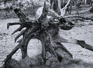 Natures Art Monochrome