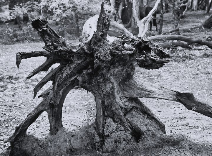 Natures Art Monochrome - JT54Photography