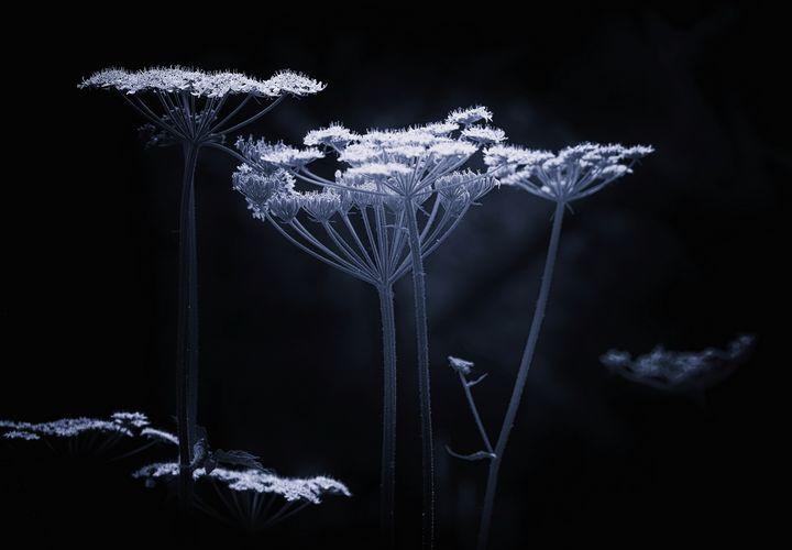 Wildflower Monochrome - JT54Photography
