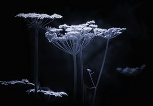 Wildflower Monochrome - JT54Photography