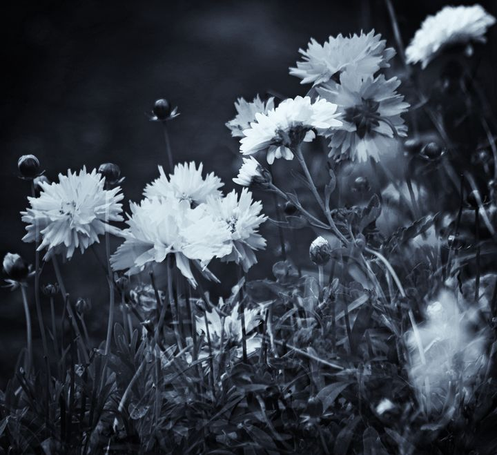 Secret Black and White Garden - JT54Photography