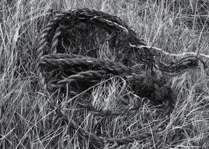 Rope In The Grass
