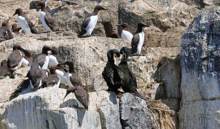 Seabirds On The Rocks - JT54Photography