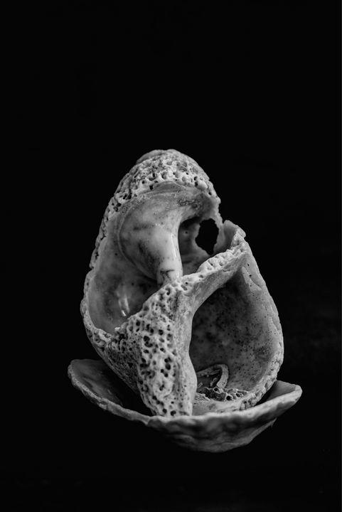 Seashell Monochrome - JT54Photography