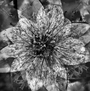 Abstract Flower Monochrome