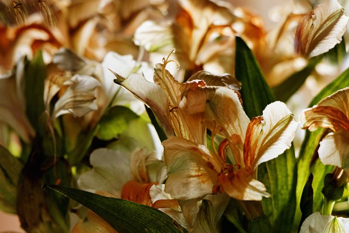 Faded Lilies Abstract - JT54Photography