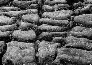Rocks And Shells Monochrome