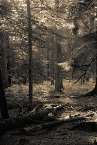 New Forest Sepia