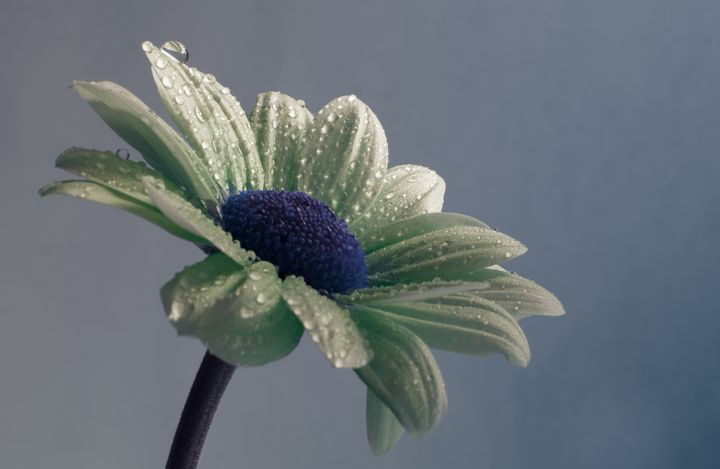 Flower with Raindrops - JT54Photography