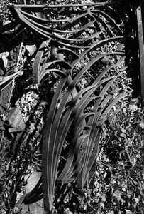 Abstract Ironwork