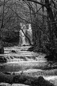 Woodland Waterfall Monochrome