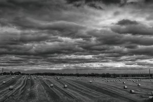 The Harvest Gathered Monochrome