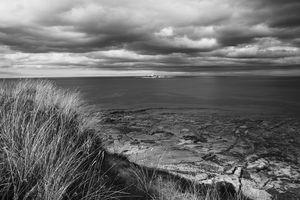 Coquet Island Monochrome