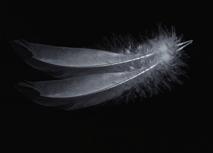 Feathers Monochrome - JT54Photography