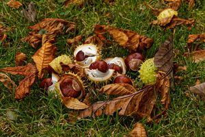 Autumnal Fruit