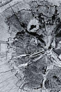 Fallen Tree Monochrome