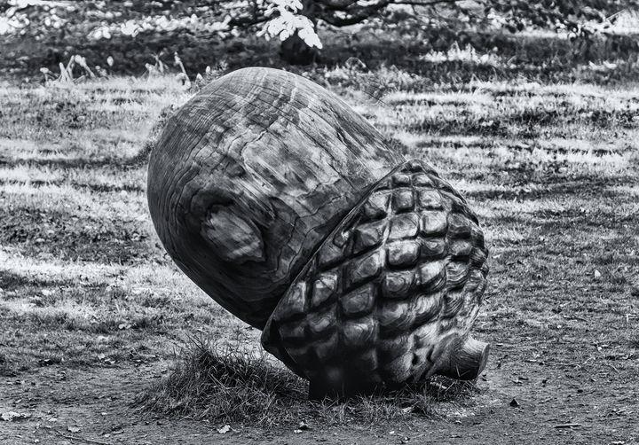 Wooden Acorn Sculpture Mono - JT54Photography