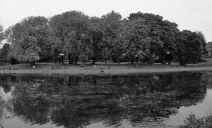 Trees By The Lake Monochrome