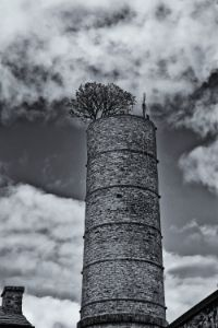 Chimney With Tree