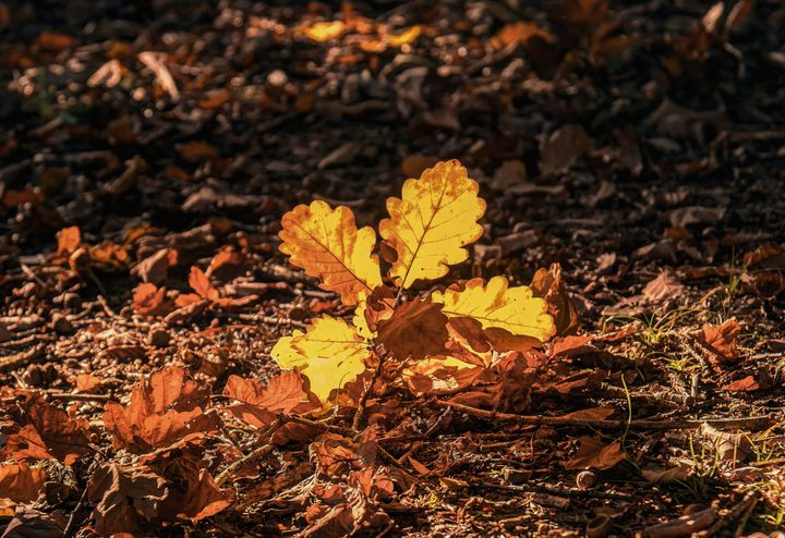 Leaves In Autumn Light - JT54Photography