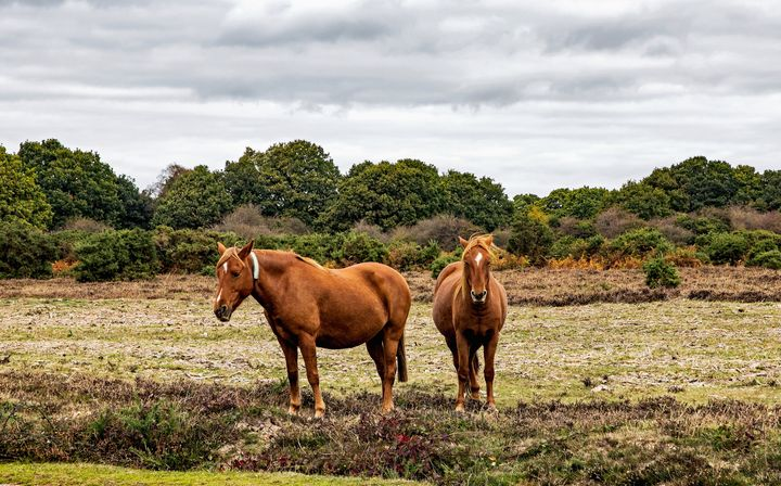 New Forest Ponies - JT54Photography