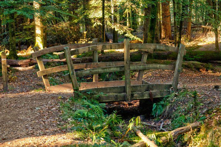 Woodland Footbridge - JT54Photography