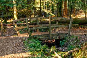 Woodland Footbridge