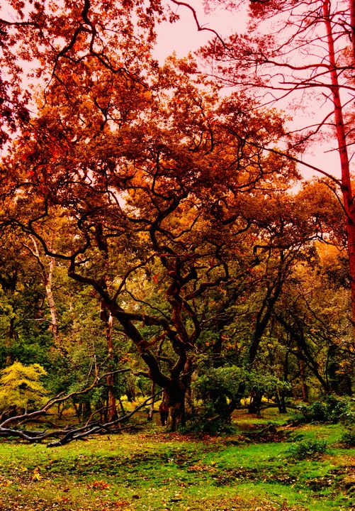 Autumn In The New Forest - JT54Photography