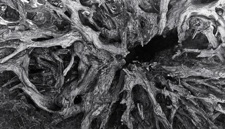 Abstract Tree Root Monochrome - JT54Photography