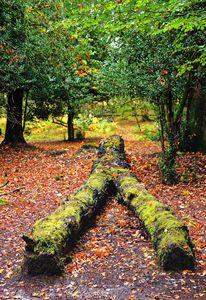 Natures Signpost