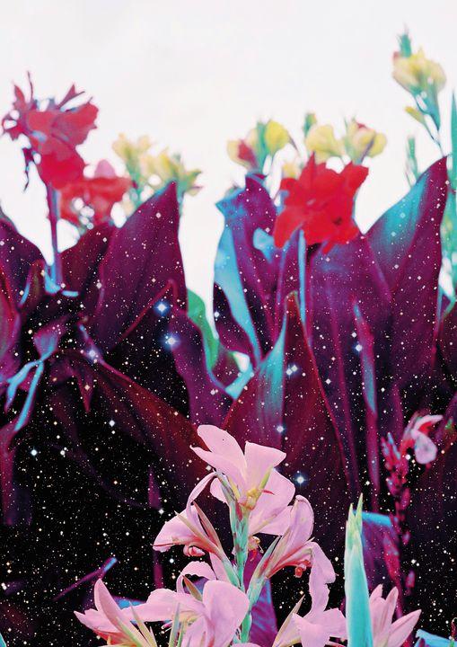 """Star Dust Petals"" Wall Art - PLANETRY ONLINE"