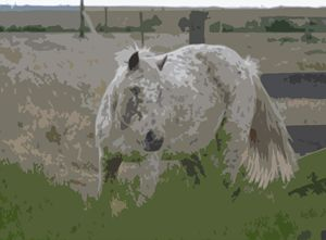 The Blind Horse