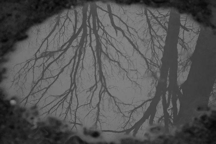 Reflections - Art by Cheyenne