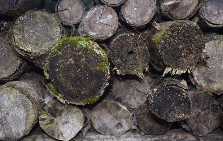 Firewood - Art by Cheyenne