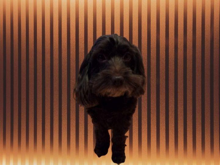 zoe feet at edge of photo 4 poster 1 - Dog Designs